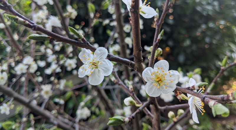 flowers by Shabena